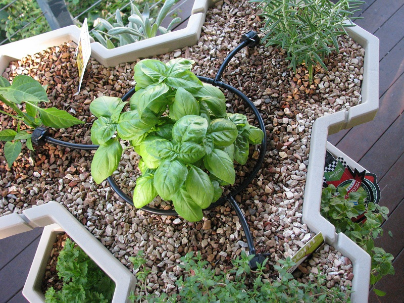 irrigation for plants by allgreenscape